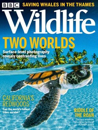 BBC Wildlife Magazine